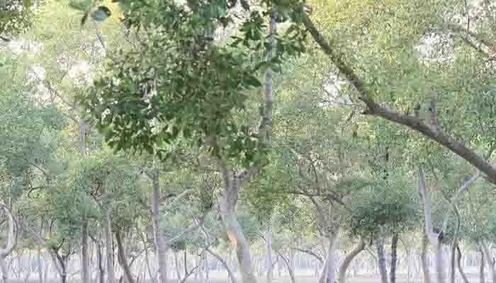 Anowara Gahira Paraban