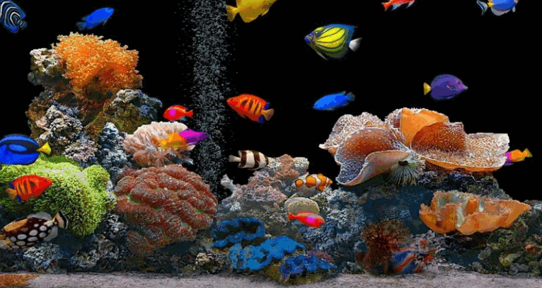 Radient Fish World
