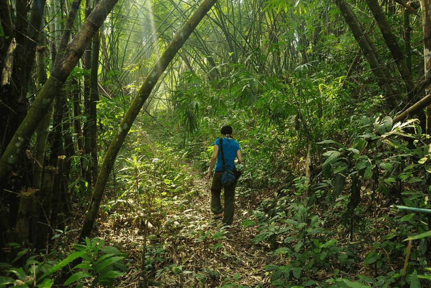 Lawachara Eco Park