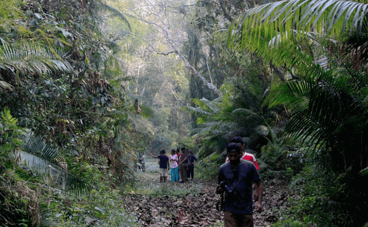 Rema Kalenga Reserved Forest