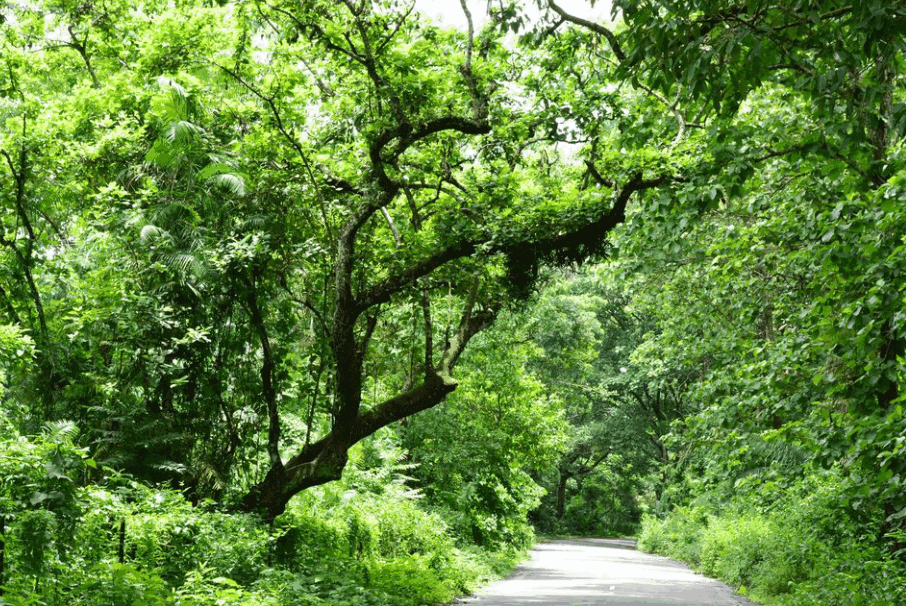 Satchari National Forest
