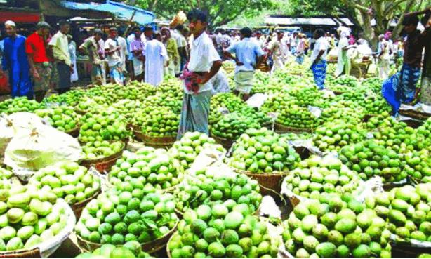 Kanshat Mango Market