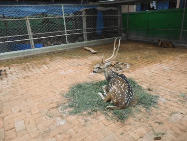Shitesh Babu's Zoo